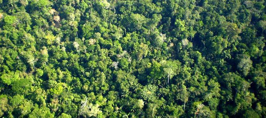 Brasil é principal exemplo de sucesso na redução do desmatamento, aponta ONU