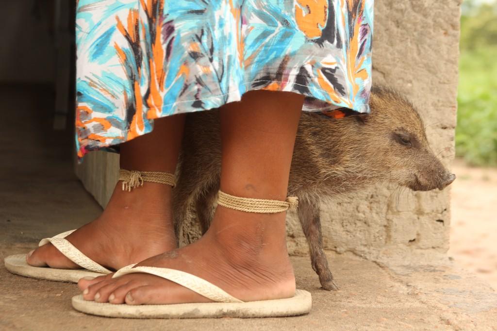 Moça Xavante com seu porquinho na TI Marãiatasédé, MT