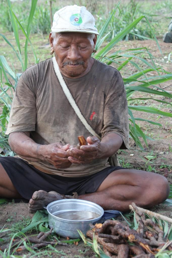 Dutra prepara raiz medicinal. TI Marãiwatsédé, MT