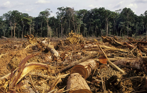 """Haddad: """"na hipótese de Bolsonaro ser eleito, será o começo do fim da Amazônia"""""""