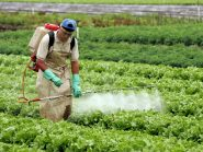 Justiça norte-americana associa agrotóxico liberado no Brasil a câncer