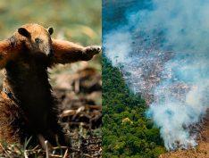 Lute pela Amazônia: Atos contra a política ambiental de Bolsonaro no Brasil e no mundo
